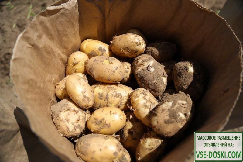 Картофель свежий урожай 2020 года
