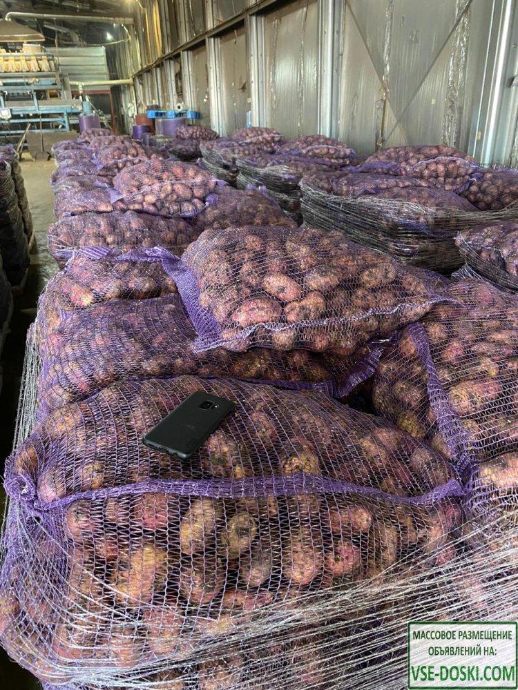 Оптовые поставки картофеля от производителя
