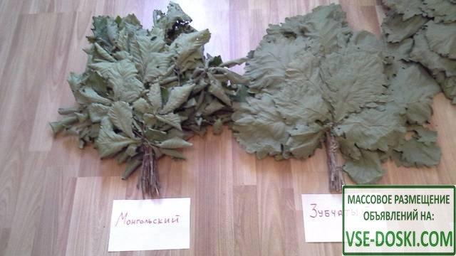 Веники дубовые с приморского края 3 вида хит