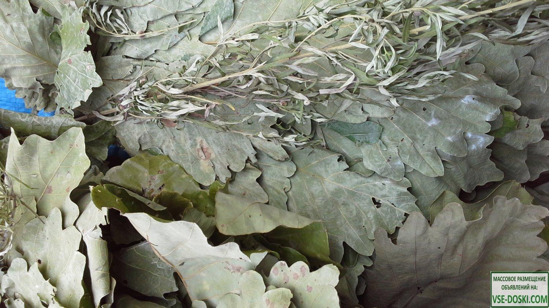 Веник для бани дубовый в ассортименте Монгольский дуб, Вутайшанский Дуб, Дентата дуб